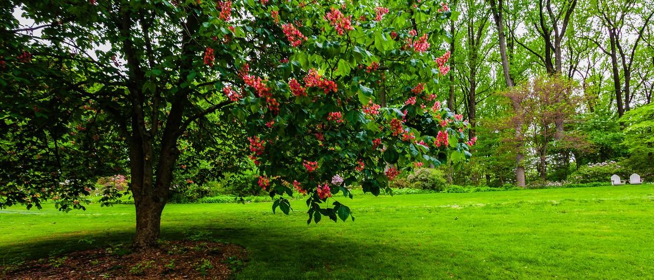 滨州詹金斯植物园(Jenkins Arboretum),一步一景_图1-2