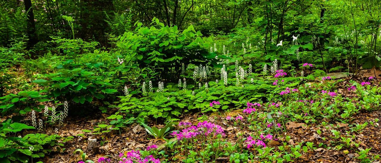 滨州詹金斯植物园(Jenkins Arboretum),一步一景_图1-3
