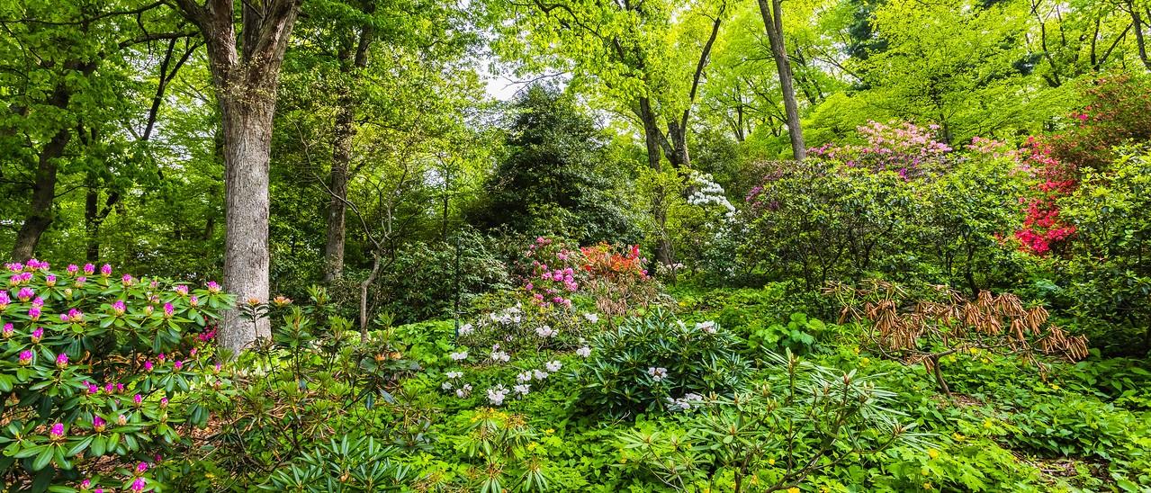 滨州詹金斯植物园(Jenkins Arboretum),一步一景_图1-4