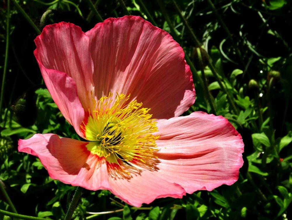 花卉日记-75_图1-2