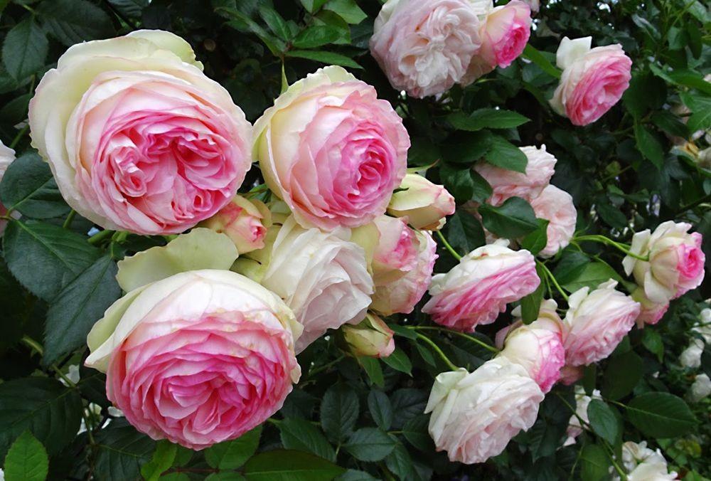花卉日记-75_图1-3