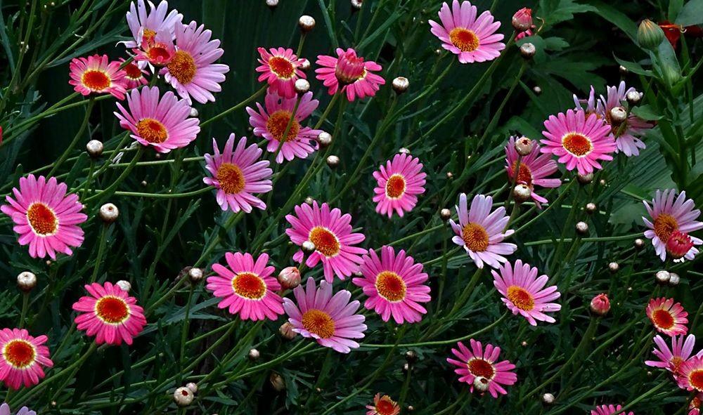 花卉日记-75_图1-4