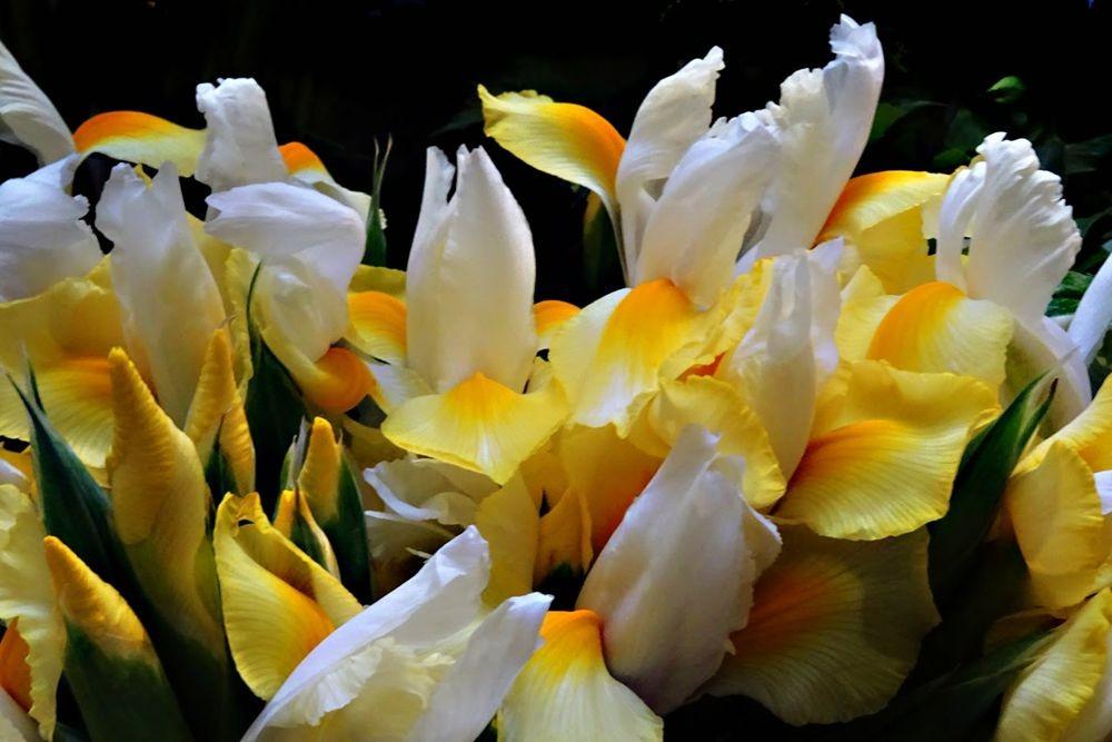 花卉日记-75_图1-6