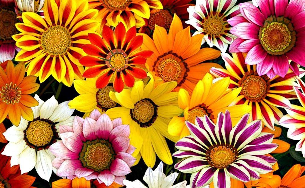 花卉日记-75_图1-9