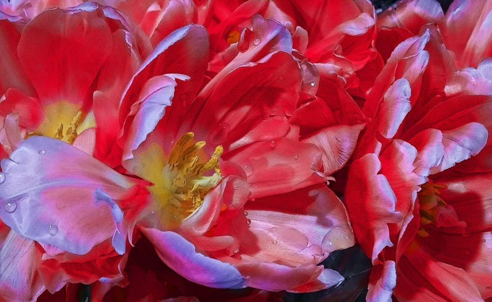 花卉日记-75_图1-10