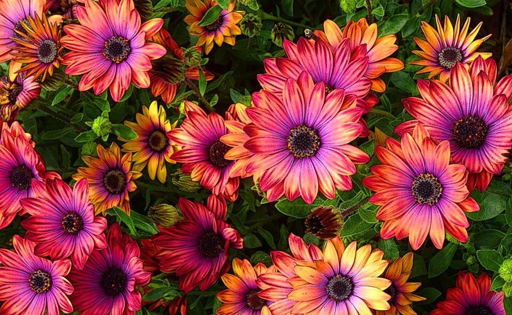 花卉日记-75_图1-12