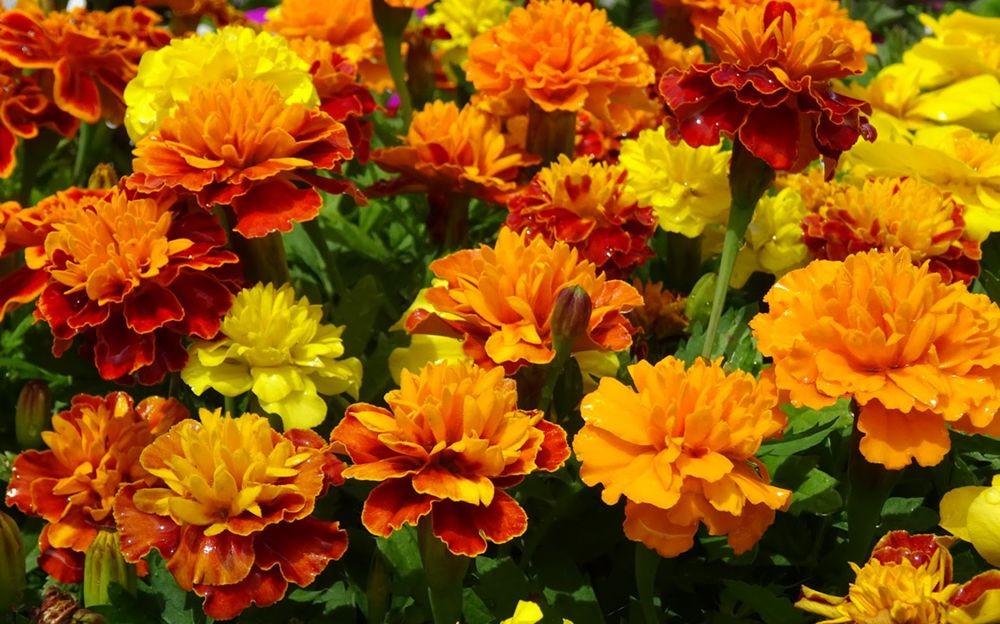 花卉日记-75_图1-13