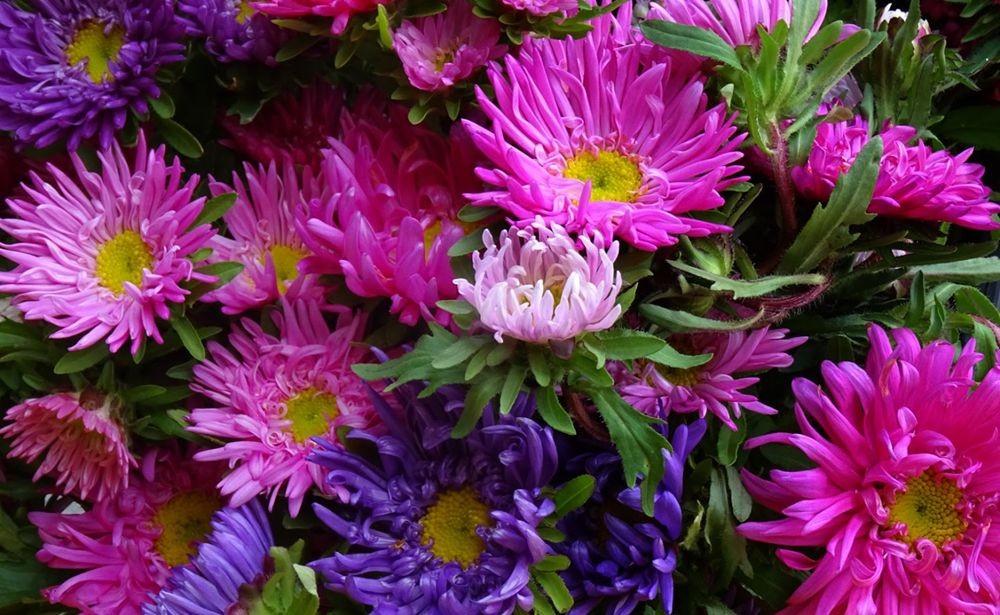 花卉日记-75_图1-17