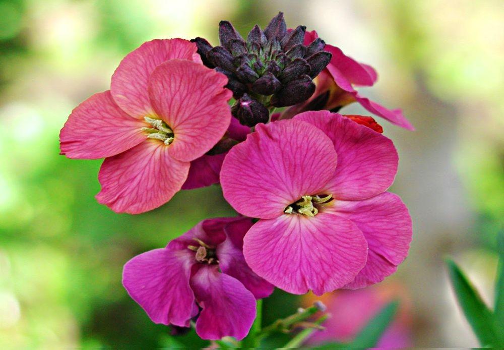 花卉日记-76_图1-2