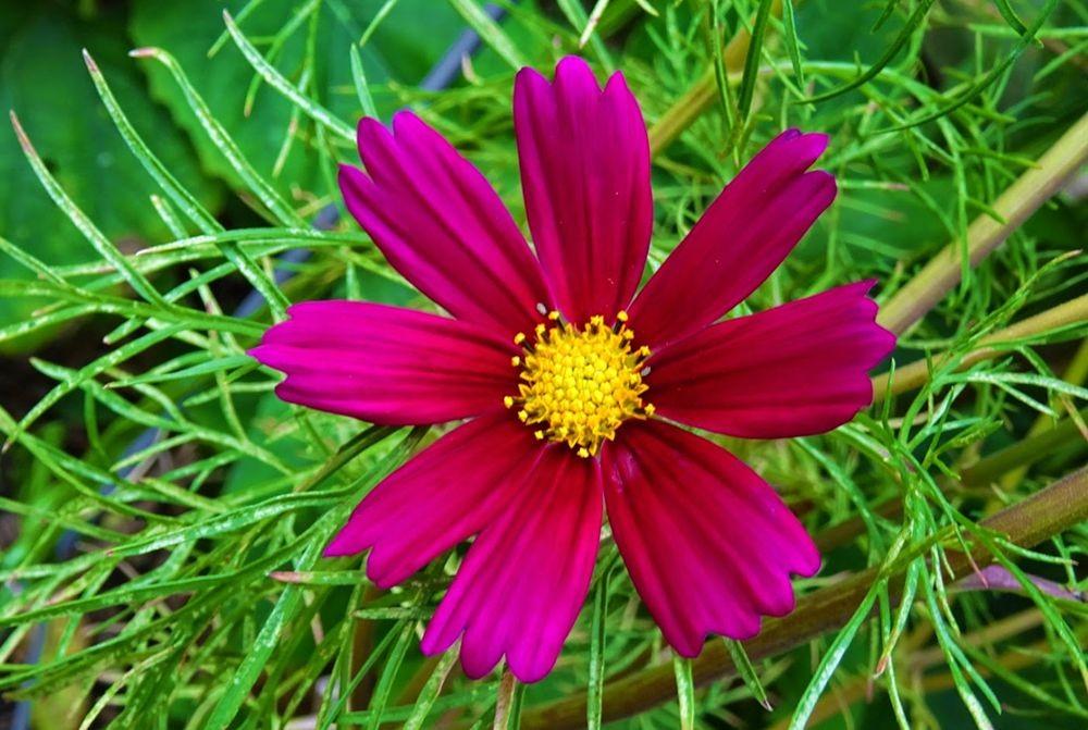 花卉日记-76_图1-3