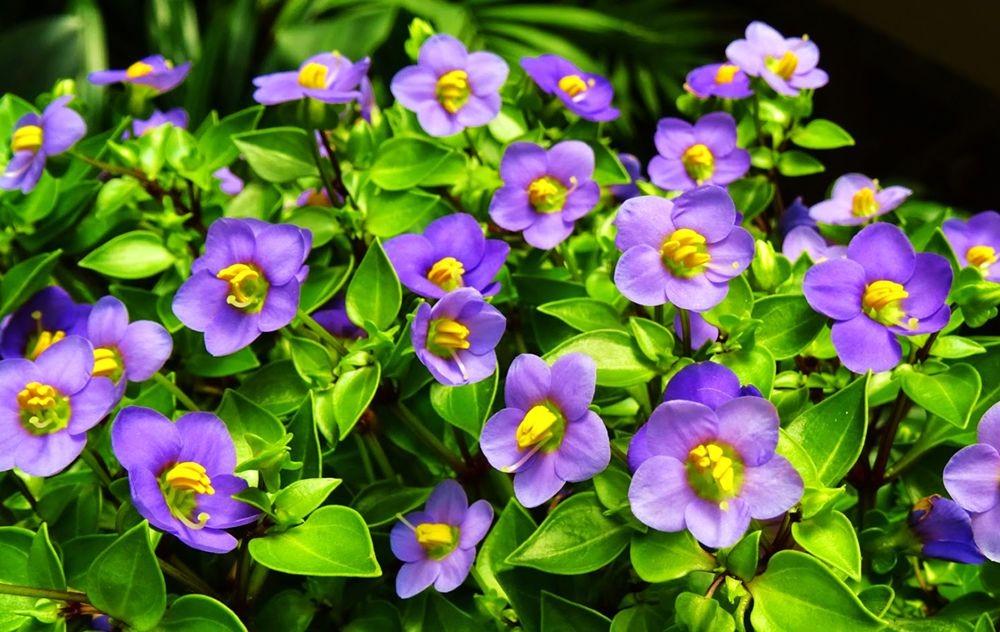 花卉日记-76_图1-4
