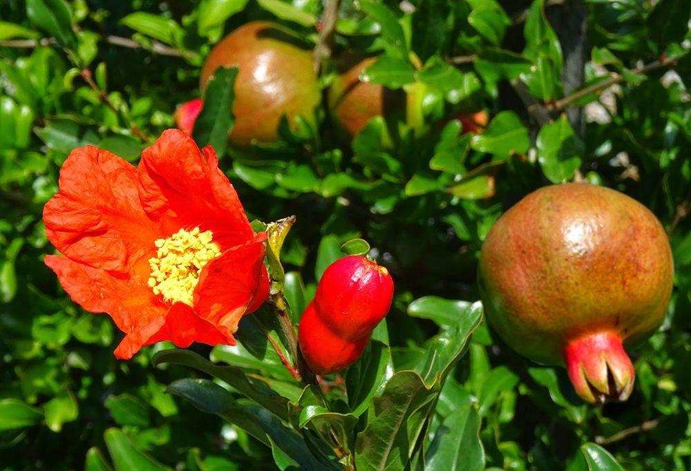 花卉日记-76_图1-6