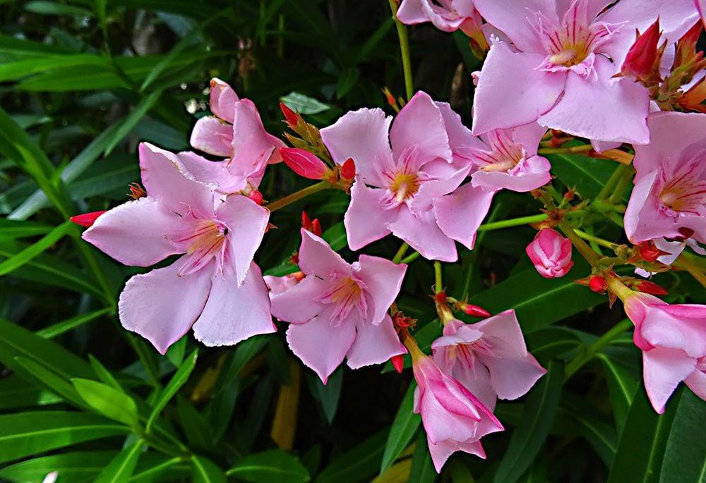 花卉日记-76_图1-8