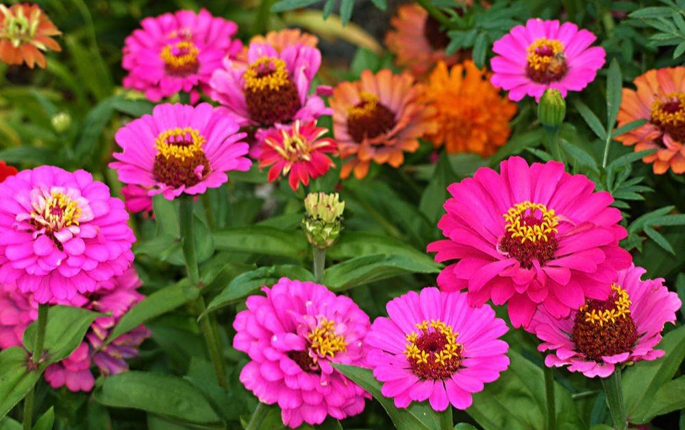 花卉日记-76_图1-9