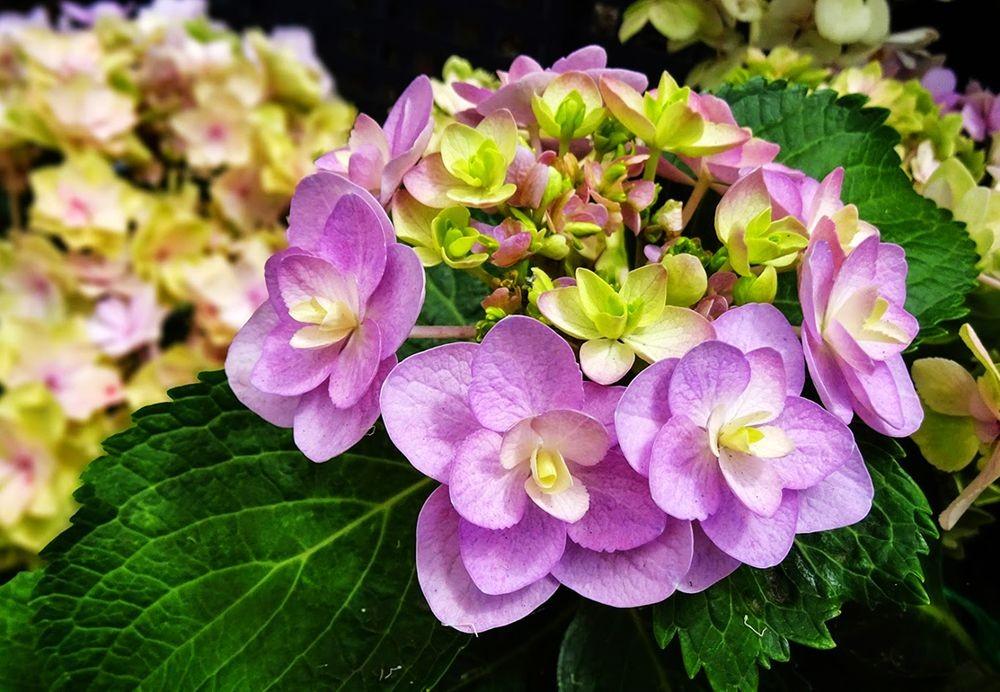 花卉日记-76_图1-10