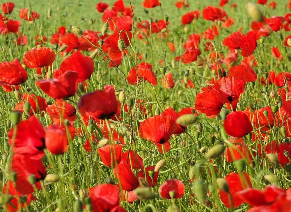 花卉日记-76_图1-11