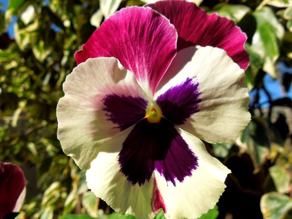 花卉日记-76_图1-14