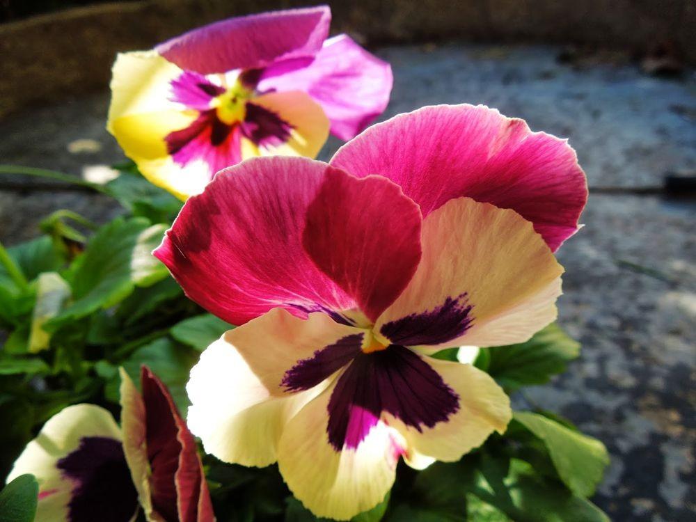 花卉日记-76_图1-15