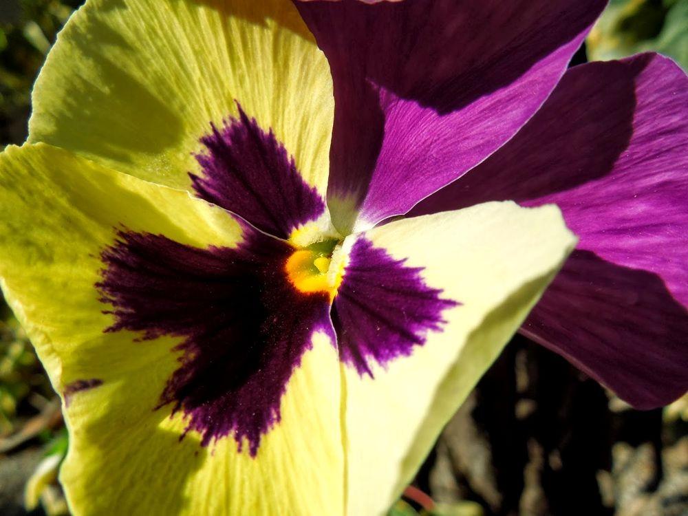 花卉日记-76_图1-16
