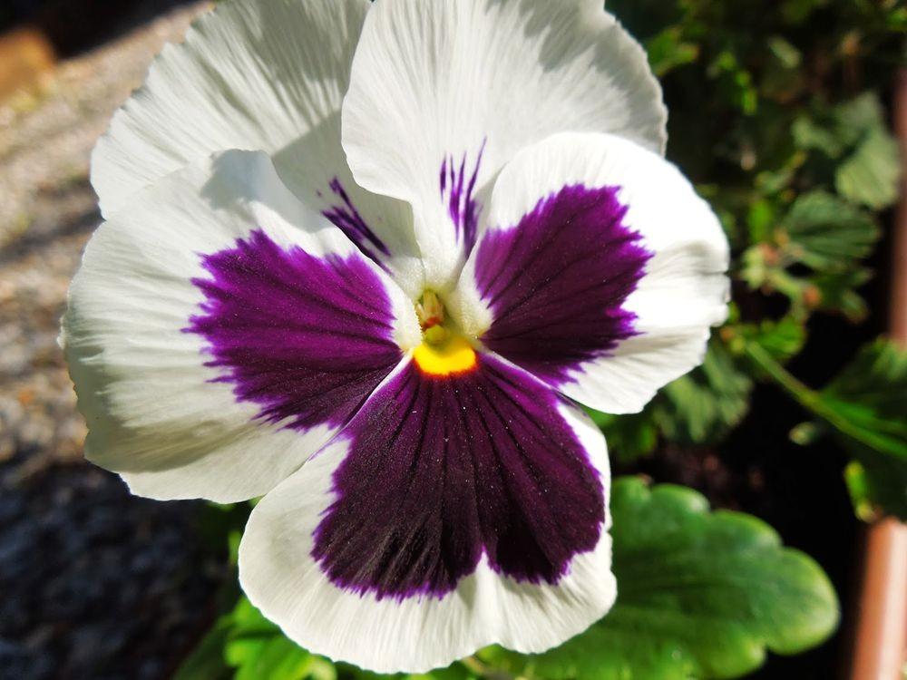 花卉日记-76_图1-17