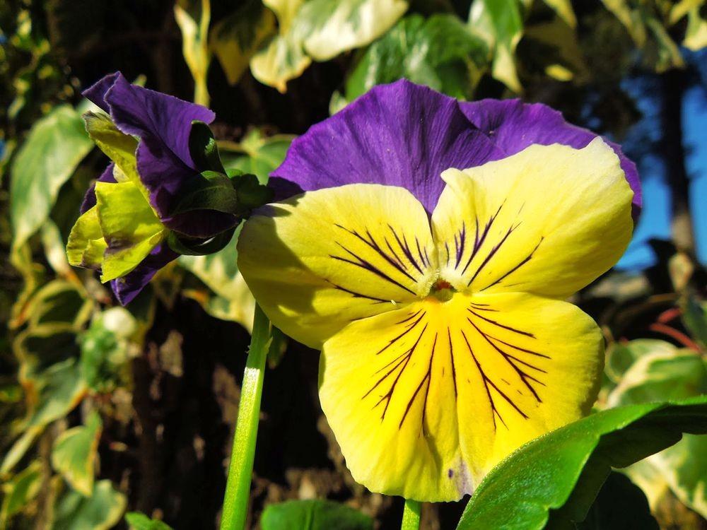 花卉日记-76_图1-18