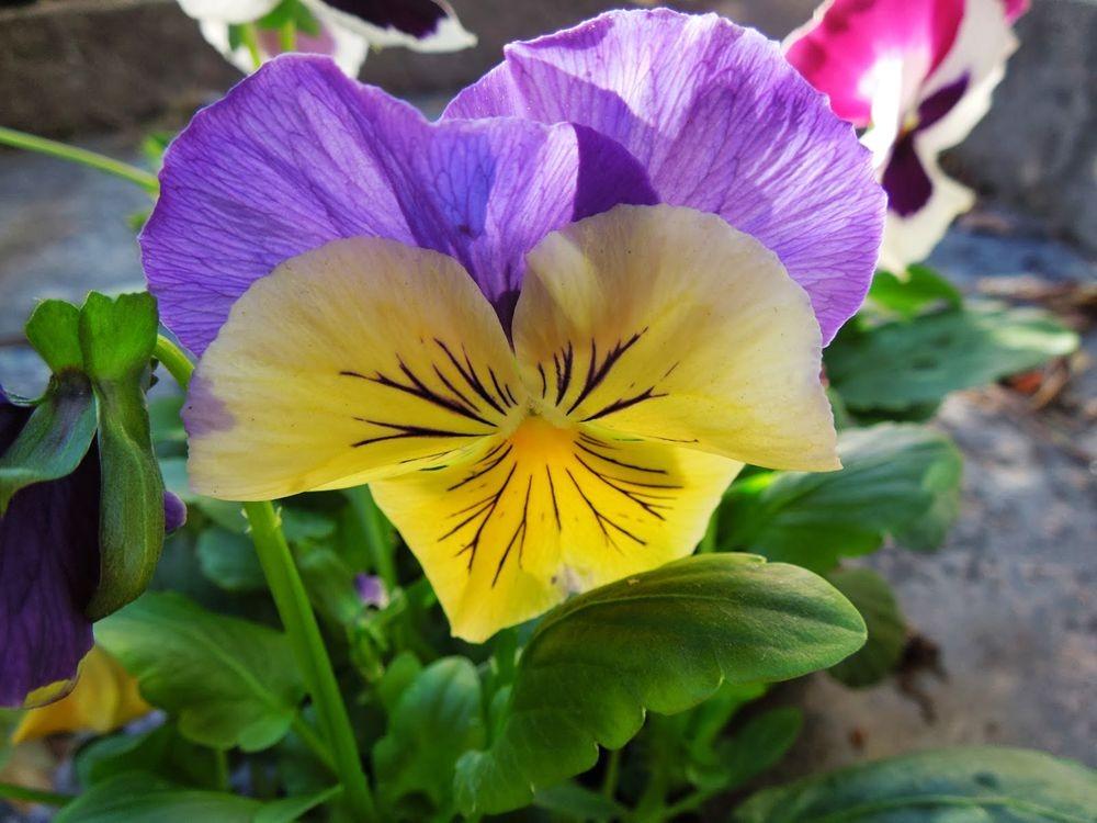花卉日记-76_图1-19