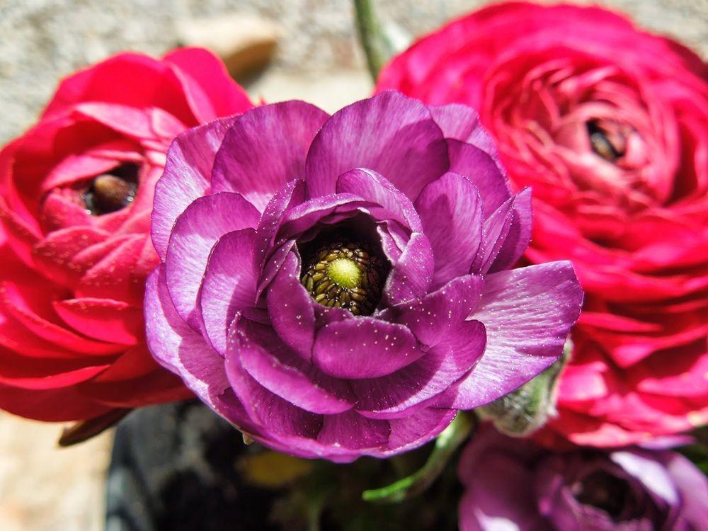 花卉日记-77_图1-1