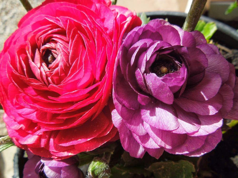 花卉日记-77_图1-2