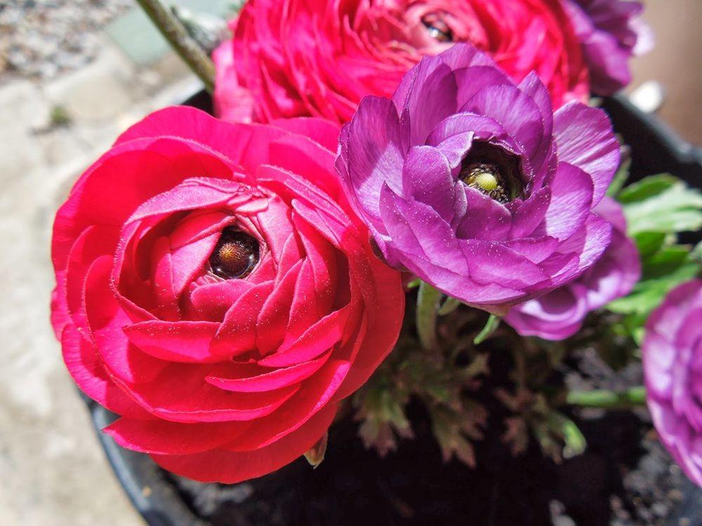 花卉日记-77_图1-3