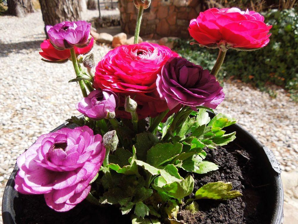 花卉日记-77_图1-5