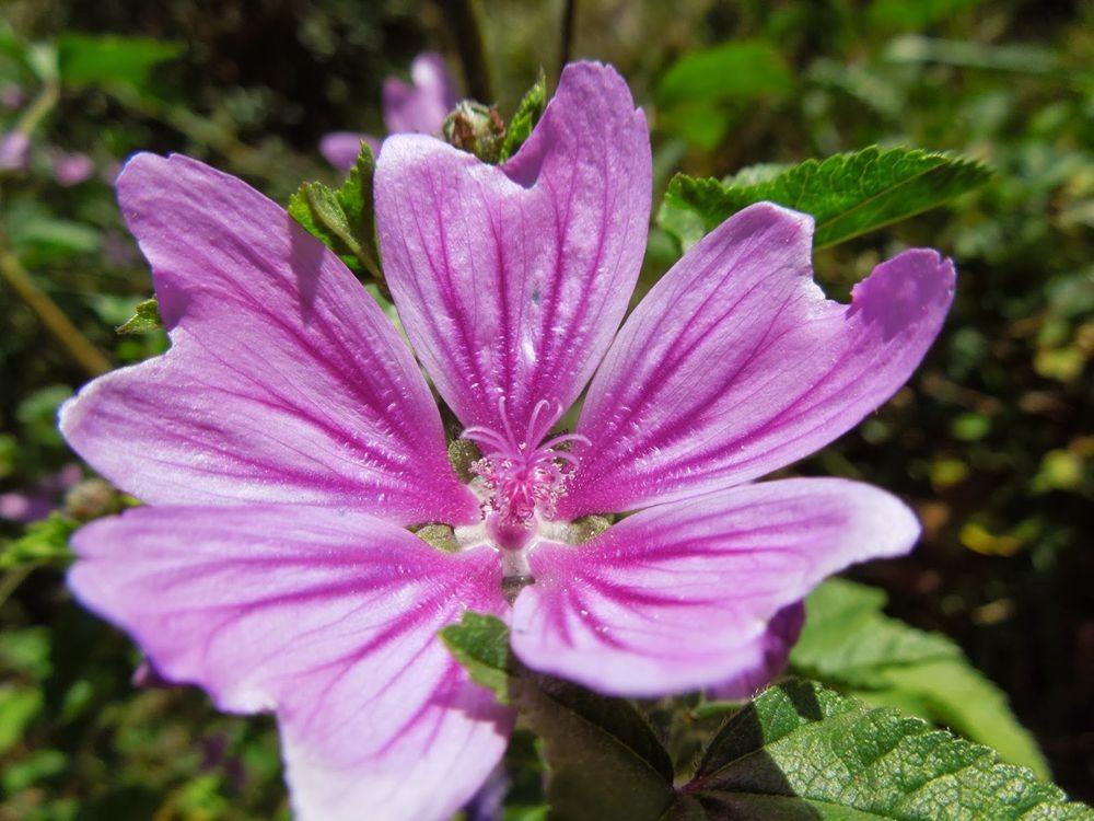 花卉日记-77_图1-11
