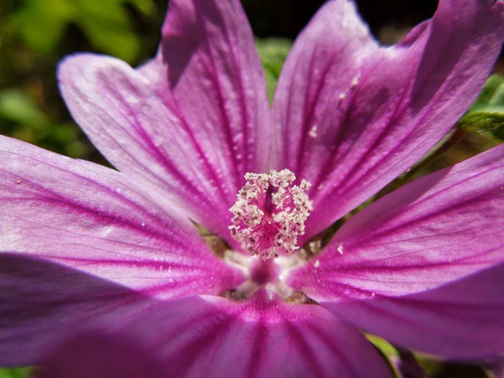 花卉日记-77_图1-13