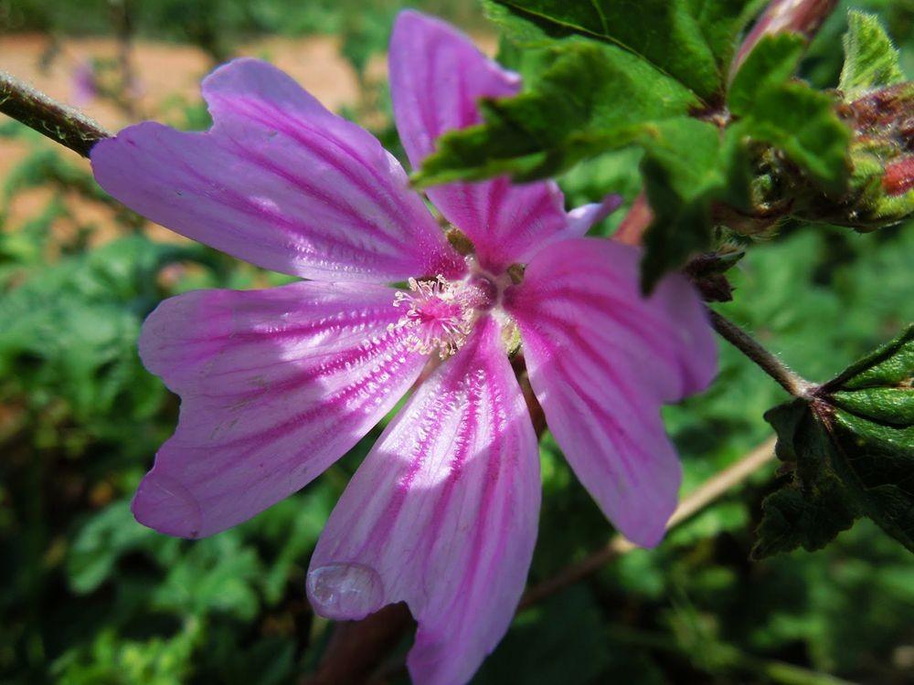 花卉日记-77_图1-16