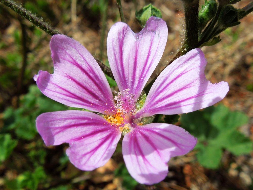 花卉日记-77_图1-17