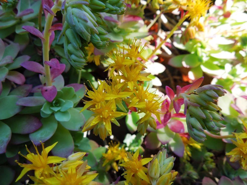 花卉日记-77_图1-19