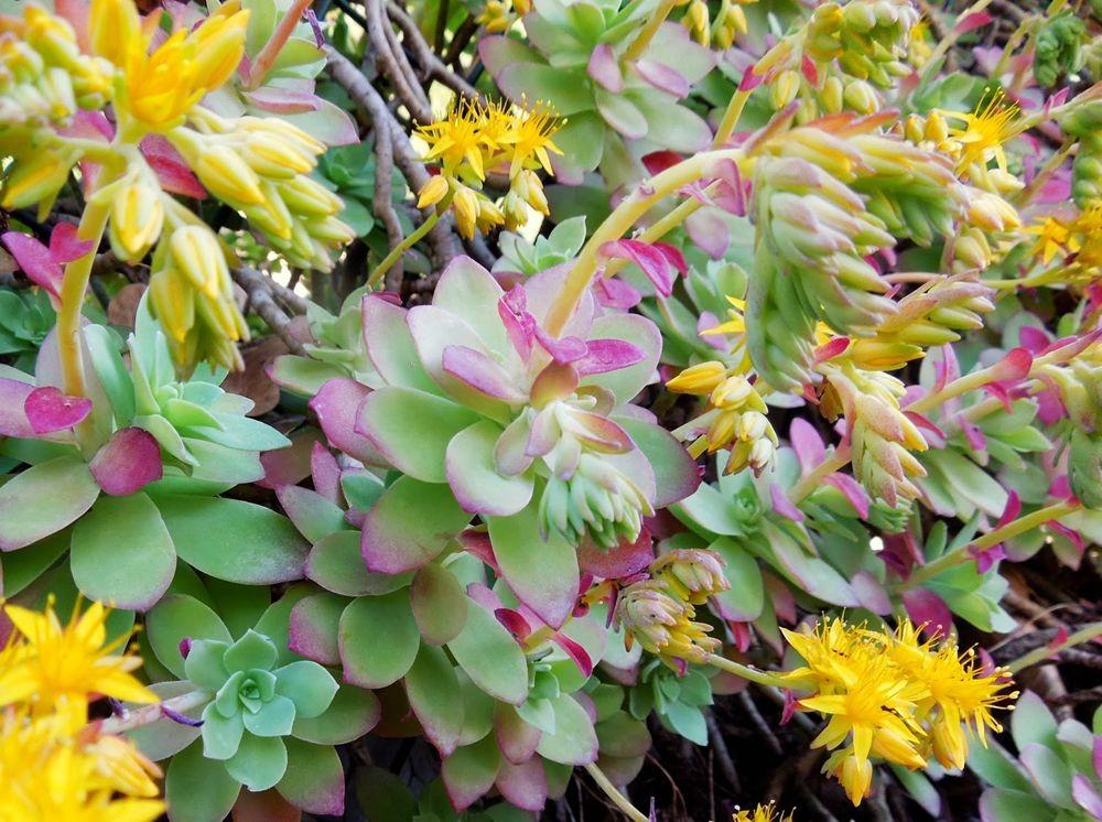 花卉日记-77_图1-20