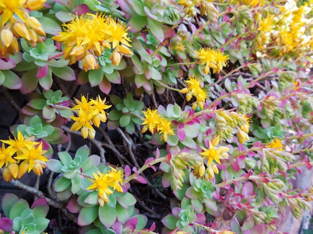花卉日记-77_图1-21
