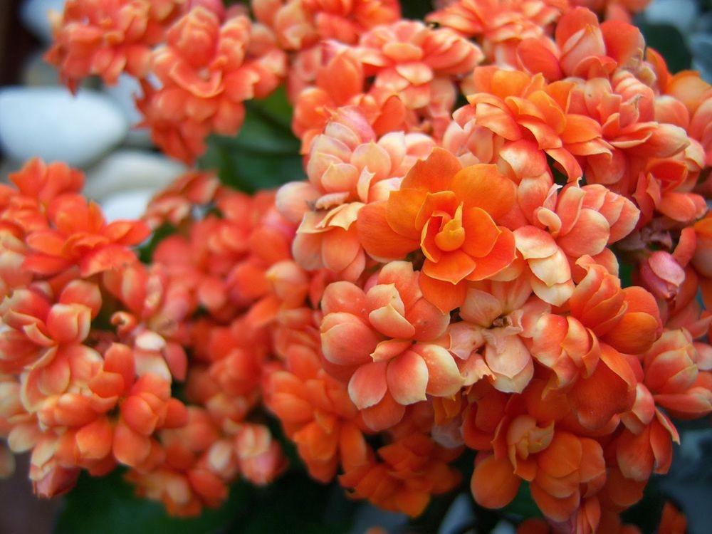 花卉日记-77_图1-22