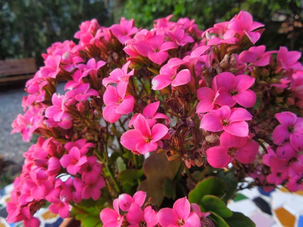 花卉日记-77_图1-24