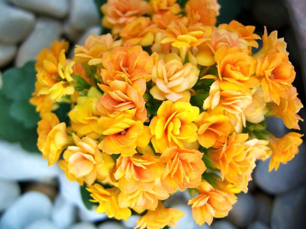 花卉日记-77_图1-25