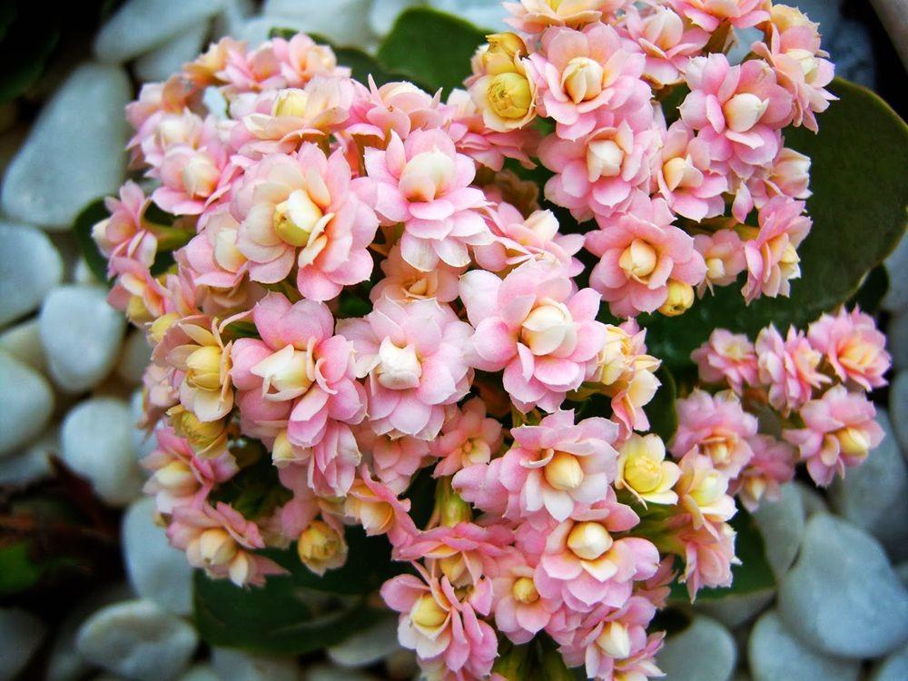 花卉日记-77_图1-26