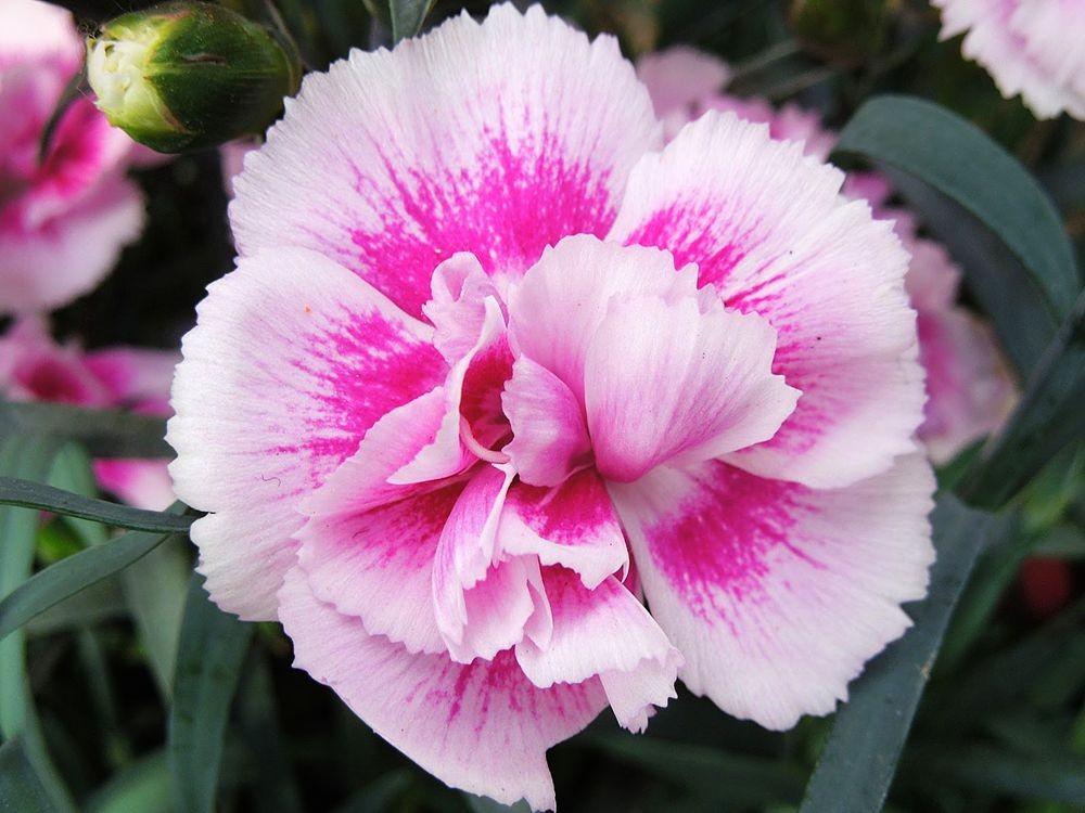 花卉日记-79_图1-1