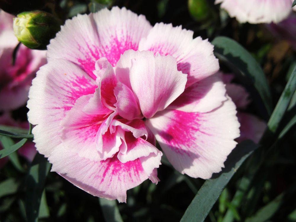 花卉日记-79_图1-2