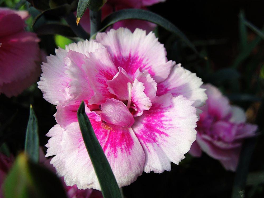 花卉日记-79_图1-3