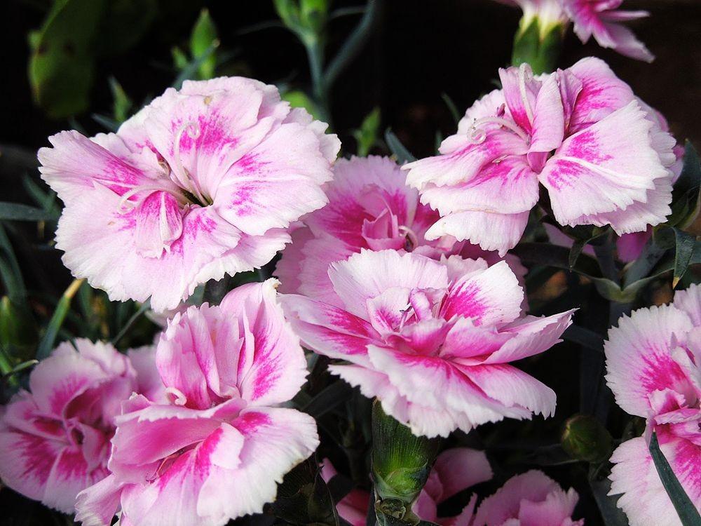 花卉日记-79_图1-4