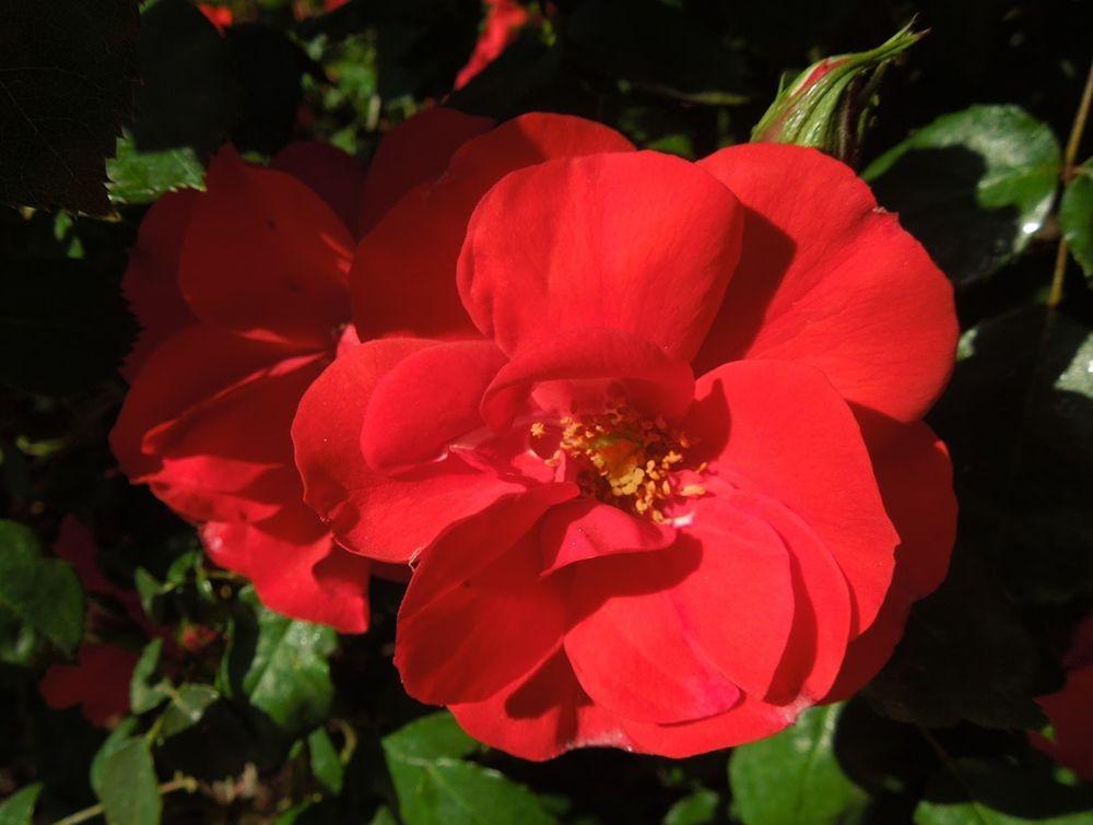 花卉日记-79_图1-6