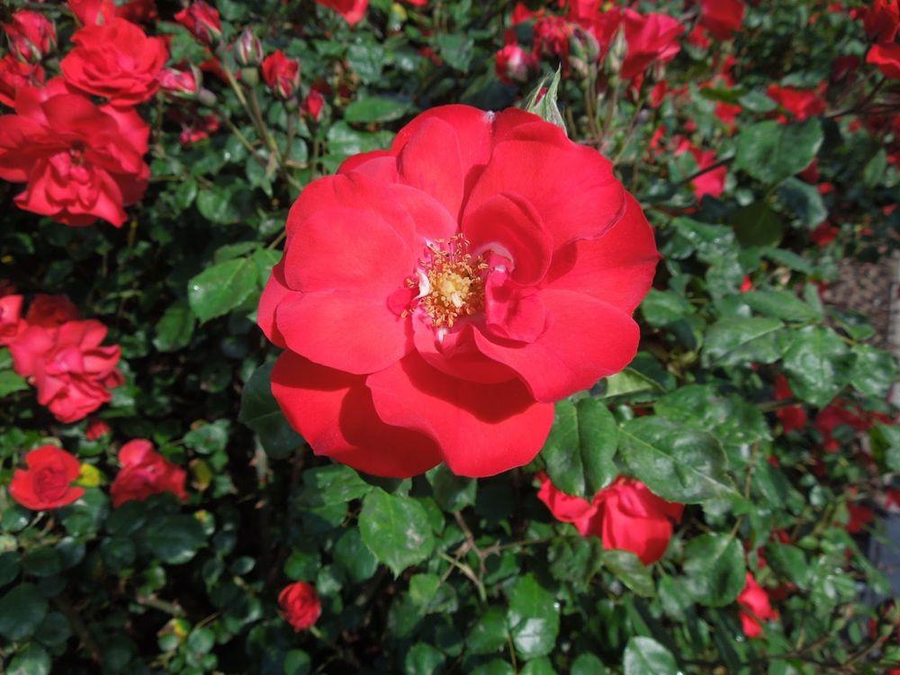 花卉日记-79_图1-7