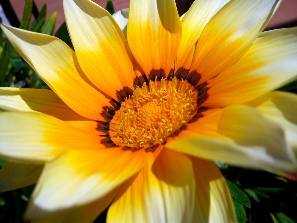 花卉日记-79_图1-8