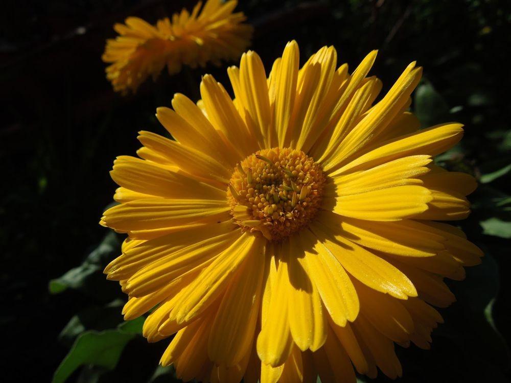 花卉日记-79_图1-9