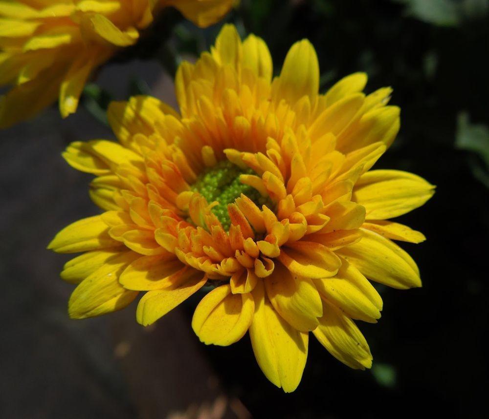 花卉日记-79_图1-10